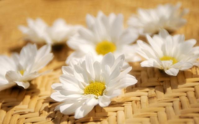 Flower_71